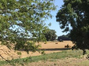 Jacqueline Stockman - Harvest time in Glinton