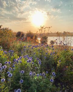 ShannonvLeighvWells - Ferry Meadows Lake at Sunset