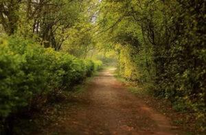 Sharmaigne Watson - Nene Park walk
