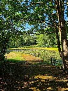 Tina Irvine - Nene Hall grounds, Lynchwood