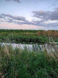 Ingrid Mandin- Stanground River Walk